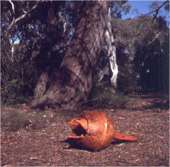 Stephen Rowley, Gumnut 1998 Red Stringybark, Australian National Botanic Gardens, Canberra.
